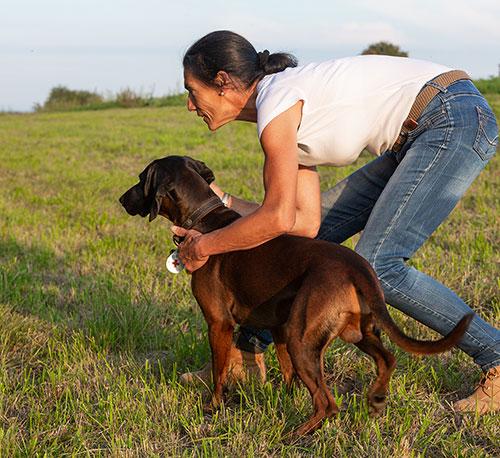 Anti Jagd Training mit Hund