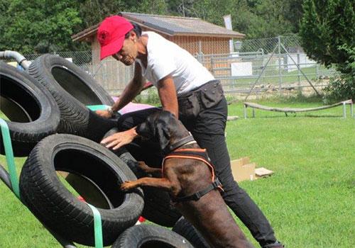 Dog Warrior Parcours mit Hund